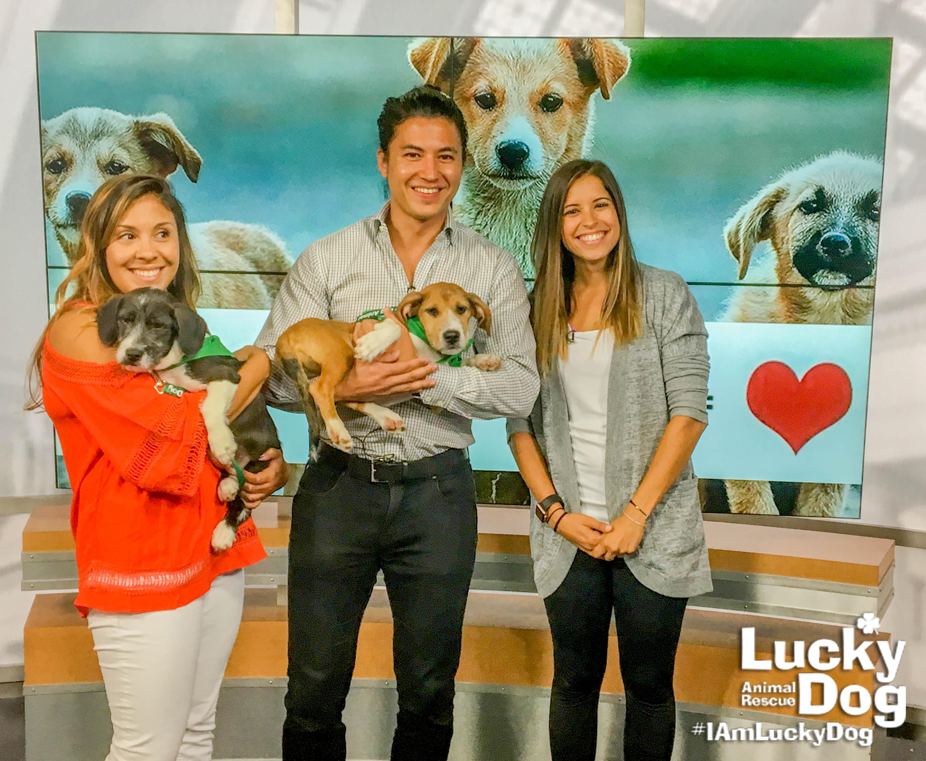 Lucky Dog Dc Adoptable Dogs