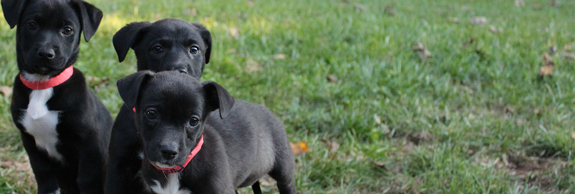 Three puppies abandoned, searching for their forever homes