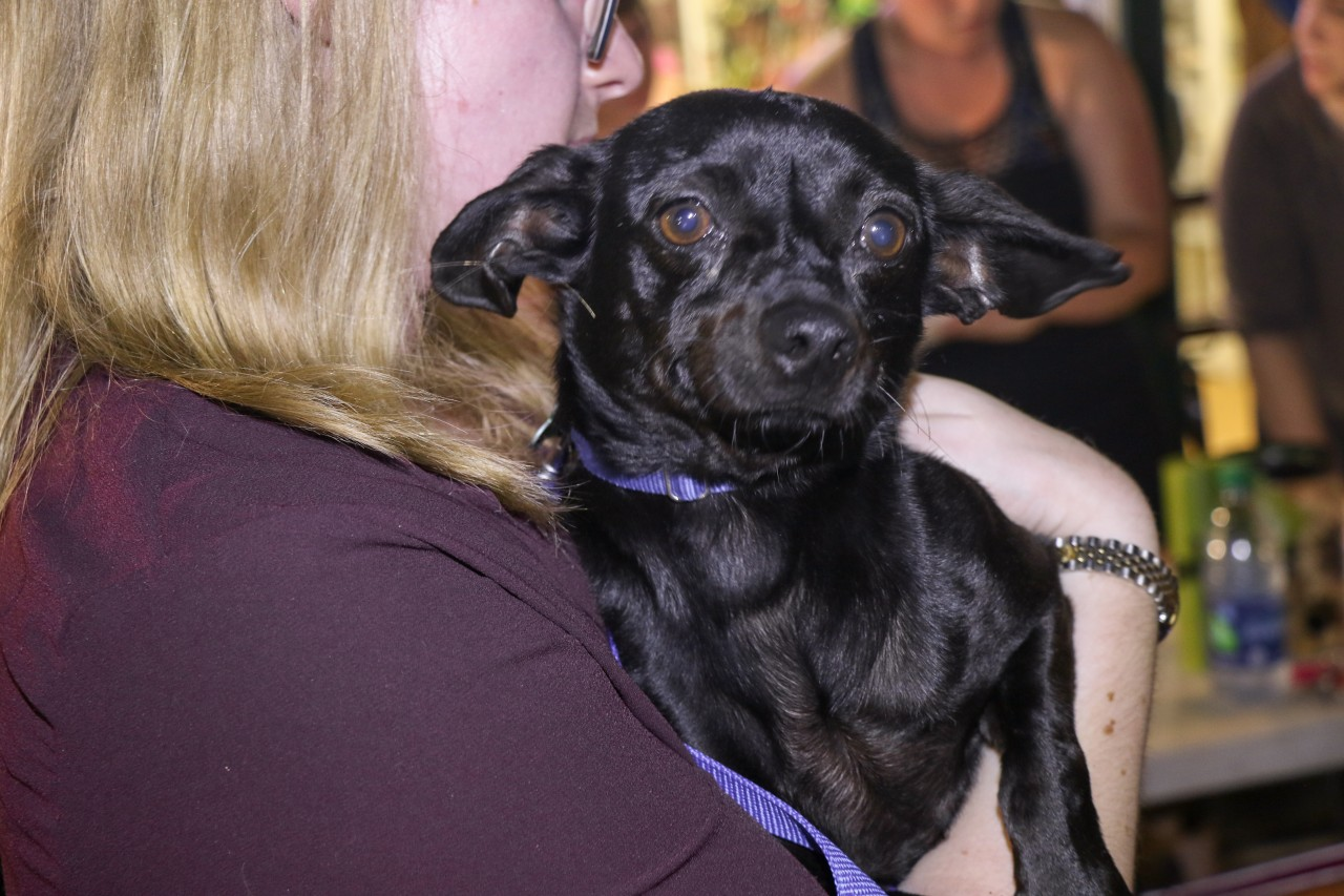 Lucky Dog Evacuates Over 50 Dogs and Cats From The Path of