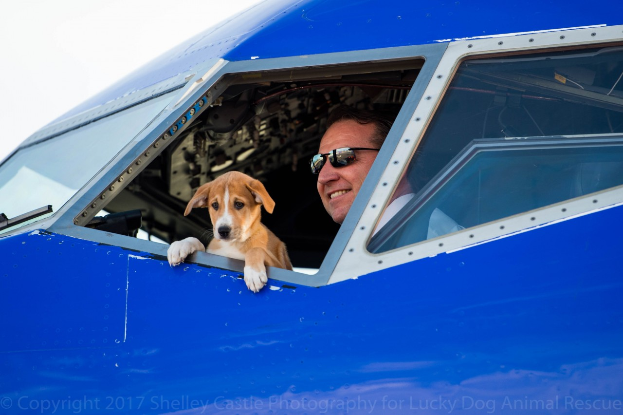 Lucky Dog Flies Over 60 Rescue Dogs And Cats From Puerto Rico To DC