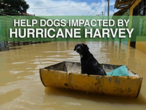 Help Dogs impacted by Hurricane Harvey