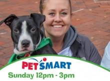 Home | Lucky Dog Animal Rescue