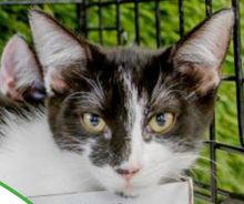 Dogma Bakery Cat Adoption Event